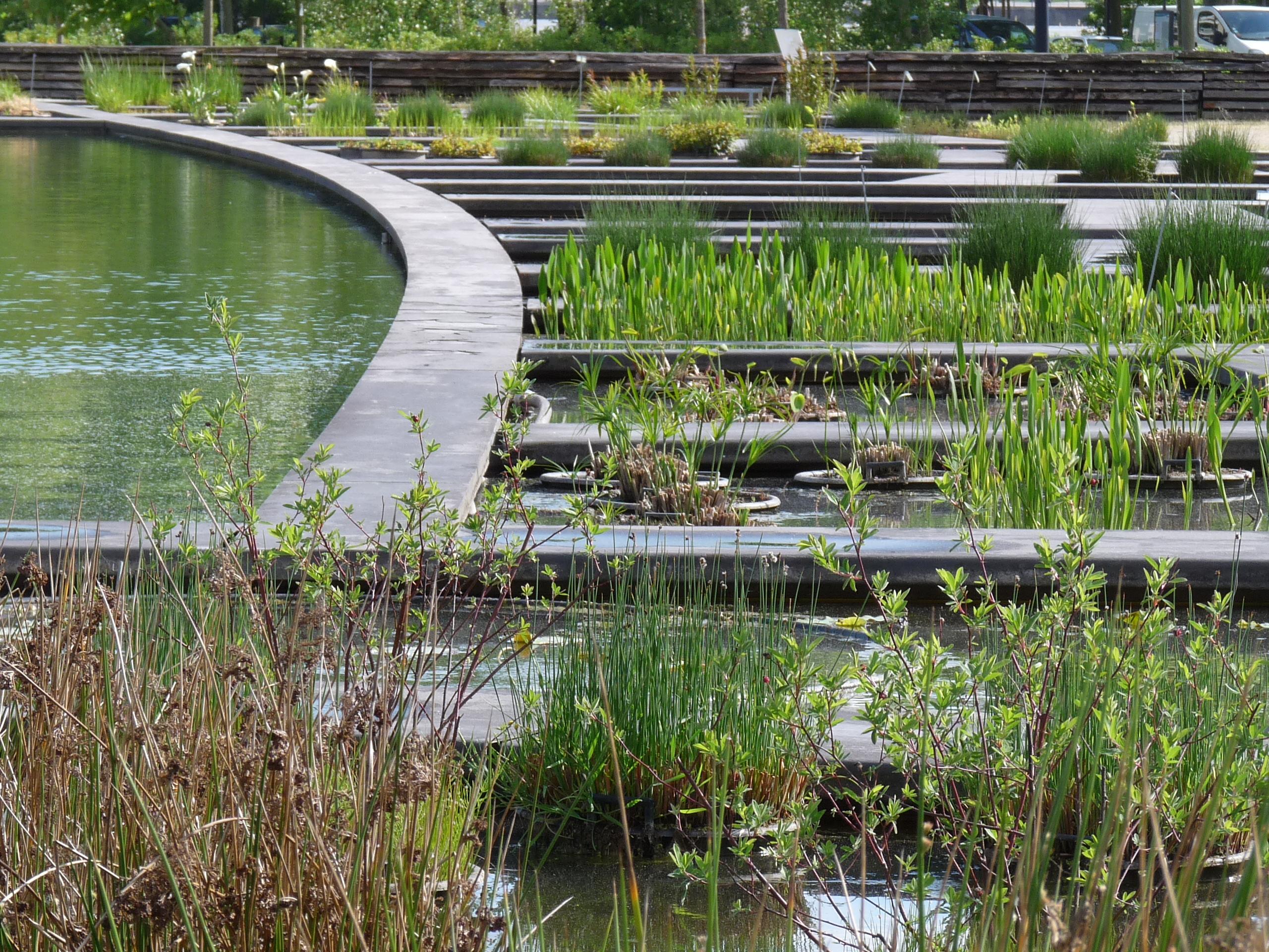 le jardin aquatique jardin botanique de bordeaux
