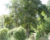 Un arbre au cœur du Jardin Botanique du Jardin Public