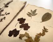L'herbier Cardoze, le plus vieux au Jardin Botanique