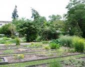 Les plates-bandes du Jardin Botanique du Jardin Public