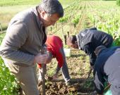 Le directeur lors d'une opération de sauvegarde de bulbes de Tulipa clusiana