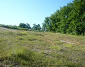 Une pelouse calcaire