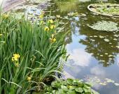 Le bassin du Jardin Botanique du Jardin Public