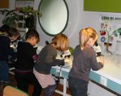 Des enfants regardent à la loupe binoculaire