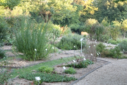 Le jardin botanique du jardin public jardin botanique de for Jardin botanique paris